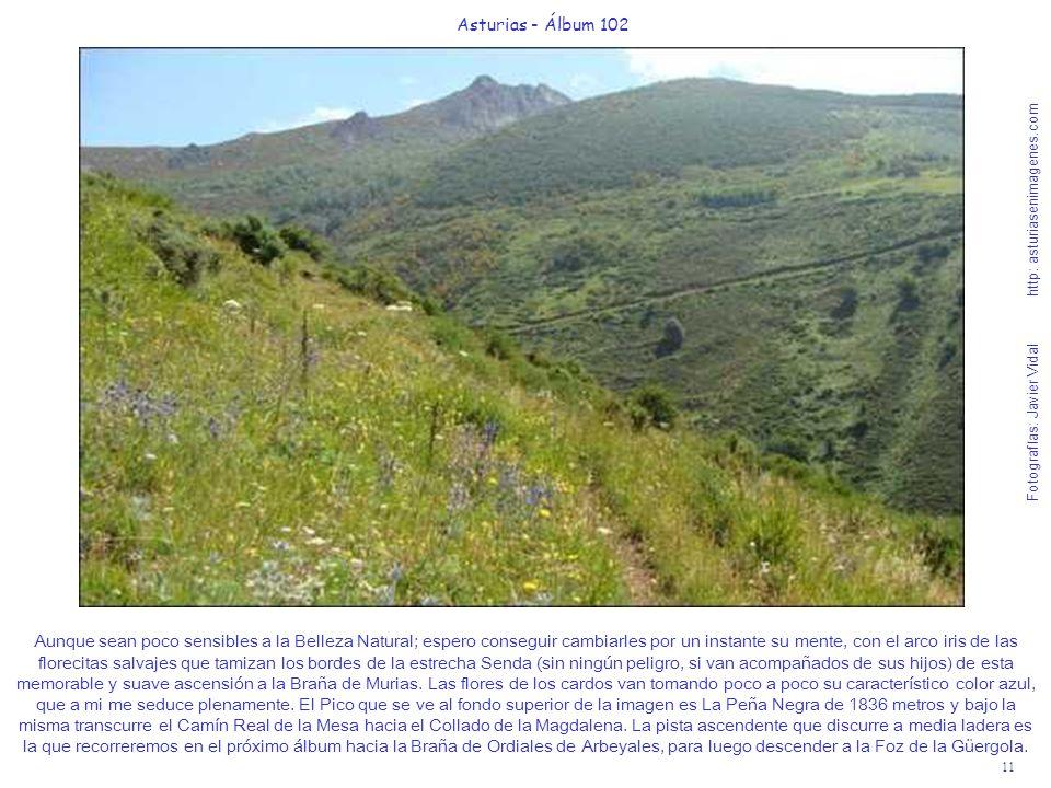 11 Asturias - Álbum 102 Fotografías: Javier Vidal http: asturiasenimagenes.com Aunque sean poco sensibles a la Belleza Natural; espero conseguir cambi