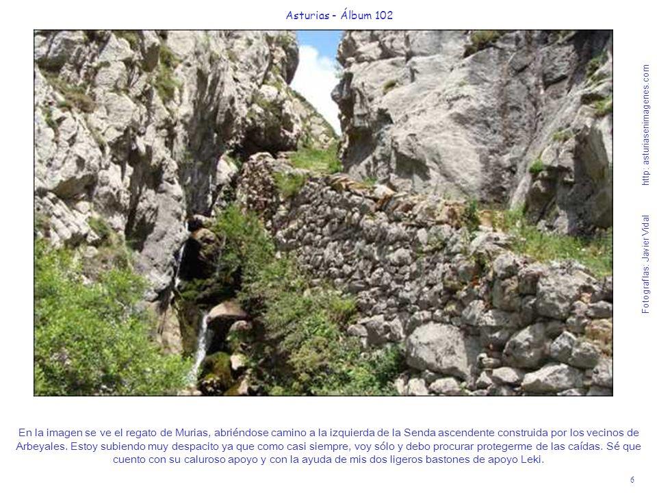 6 Asturias - Álbum 102 Fotografías: Javier Vidal http: asturiasenimagenes.com En la imagen se ve el regato de Murias, abriéndose camino a la izquierda de la Senda ascendente construida por los vecinos de Arbeyales.
