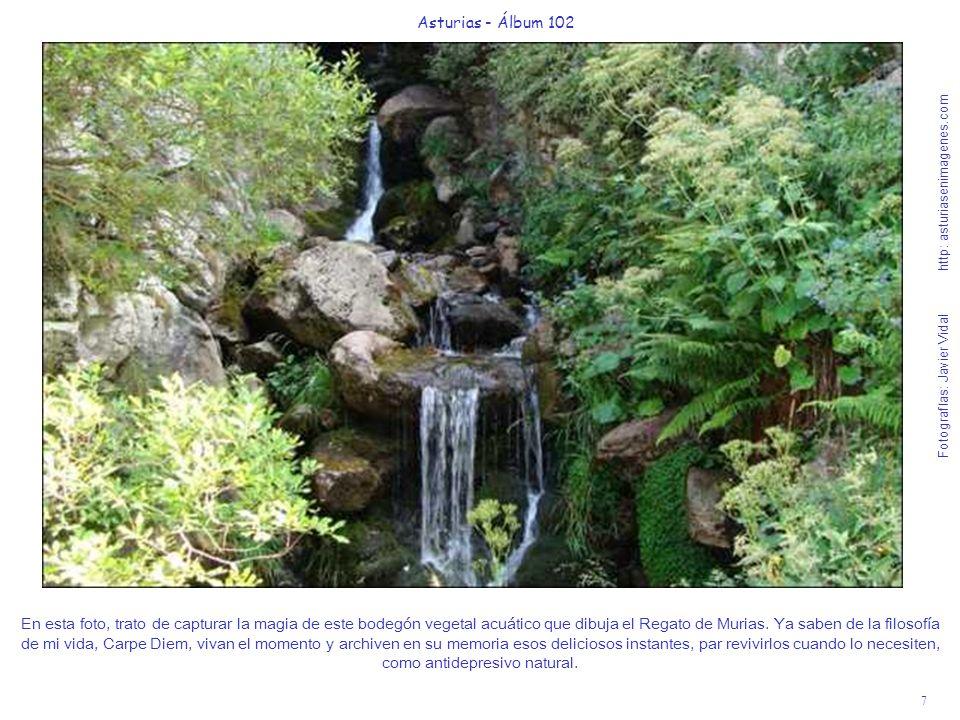7 Asturias - Álbum 102 Fotografías: Javier Vidal http: asturiasenimagenes.com En esta foto, trato de capturar la magia de este bodegón vegetal acuático que dibuja el Regato de Murias.