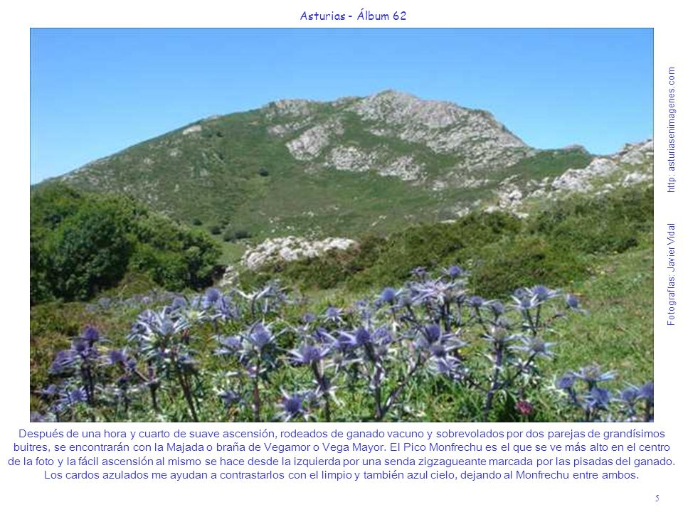 5 Asturias - Álbum 62 Fotografías: Javier Vidal http: asturiasenimagenes.com Después de una hora y cuarto de suave ascensión, rodeados de ganado vacun