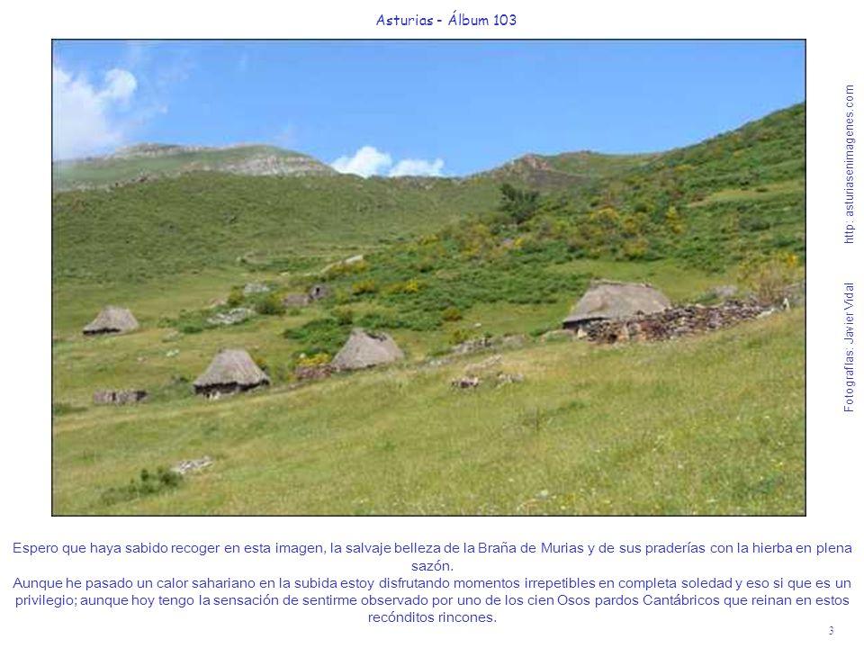 4 Asturias - Álbum 103 Fotografías: Javier Vidal http: asturiasenimagenes.com Por esta pista que se ve a media ladera, en la parte derecha de la foto, me dirijo en ½ hora de suave andar, disfrutando cada segundo de mi suerte hacia la Braña de Ordiales de Arbeyales.
