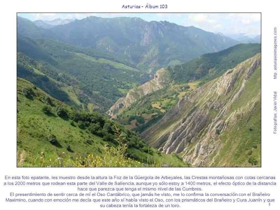 6 Asturias - Álbum 103 Fotografías: Javier Vidal http: asturiasenimagenes.com En esta foto epatante, les muestro desde la altura la Foz de la Güergola de Arbeyales, las Crestas montañosas con cotas cercanas a los 2000 metros que rodean esta parte del Valle de Saliencia, aunque yo sólo estoy a 1400 metros, el efecto óptico de la distancia hace que parezca que tenga el mismo nivel de las Cumbres.