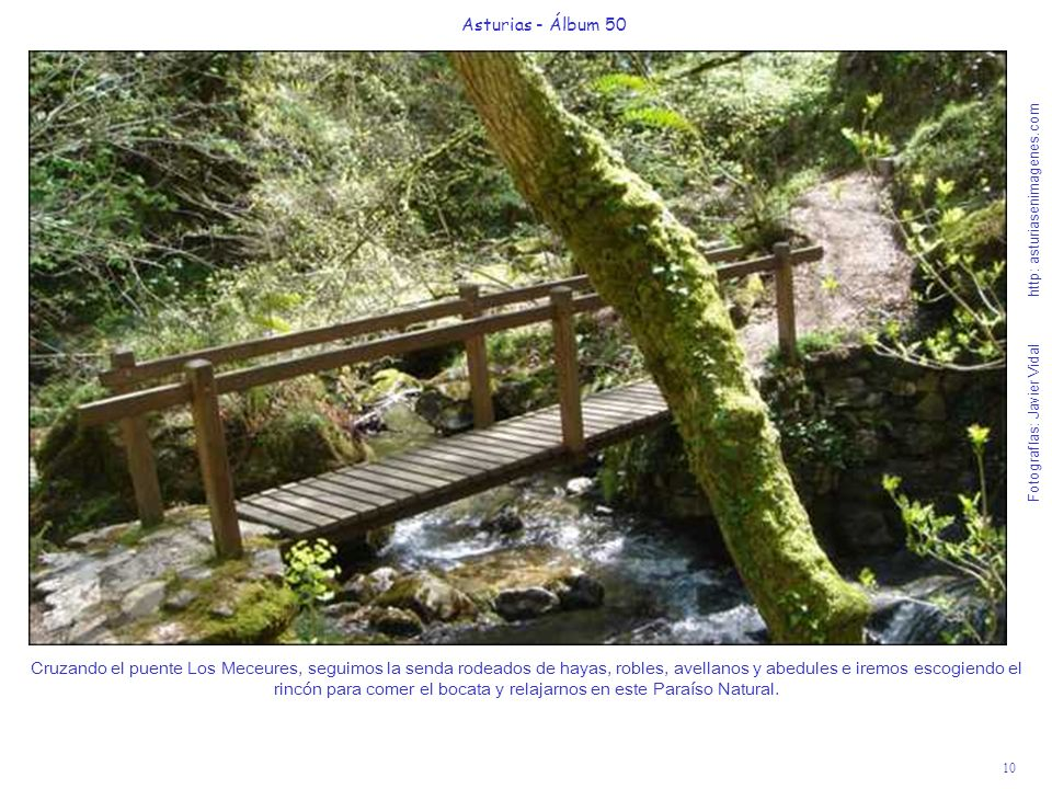 10 Asturias - Álbum 50 Fotografías: Javier Vidal http: asturiasenimagenes.com Cruzando el puente Los Meceures, seguimos la senda rodeados de hayas, ro