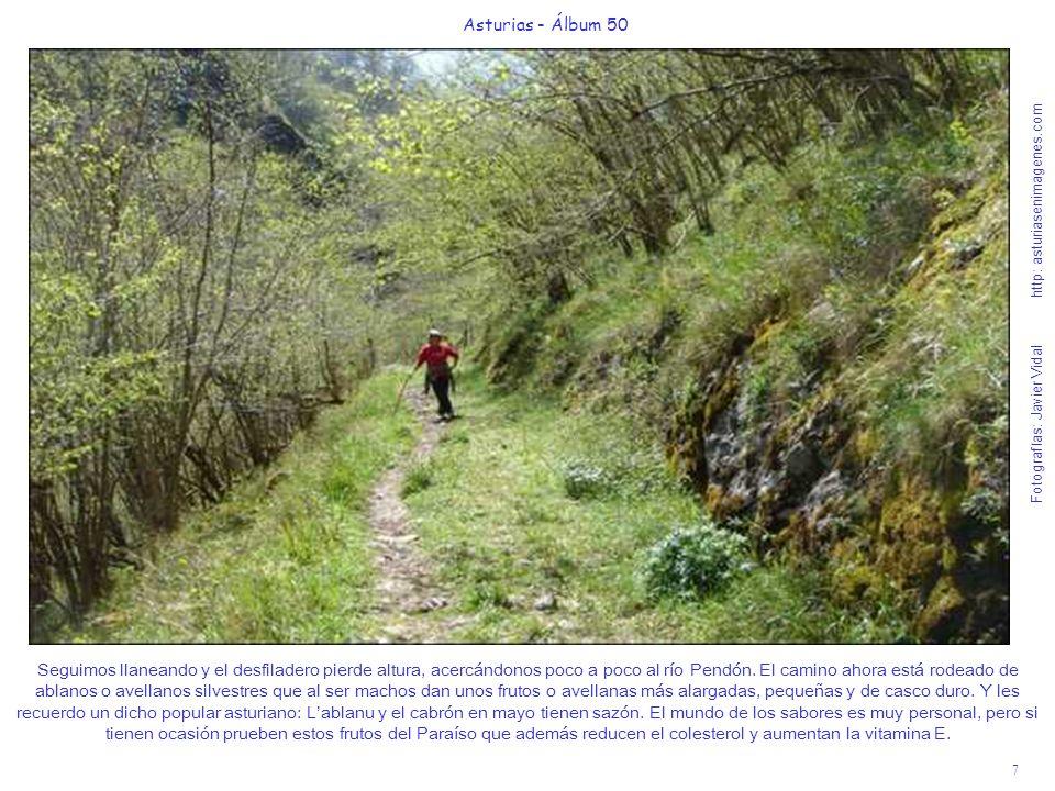 8 Asturias - Álbum 50 Fotografías: Javier Vidal http: asturiasenimagenes.com Como les decía en la foto anterior la senda se va acercando al río Pendón.