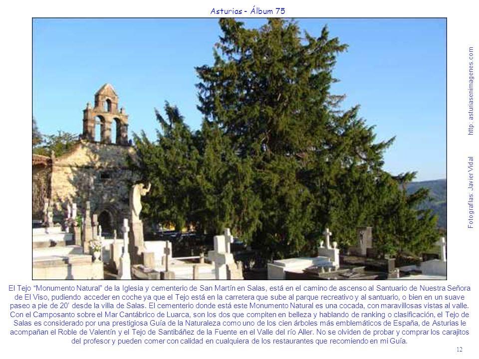 12 Asturias - Álbum 75 Fotografías: Javier Vidal http: asturiasenimagenes.com El Tejo Monumento Natural de la Iglesia y cementerio de San Martín en Sa