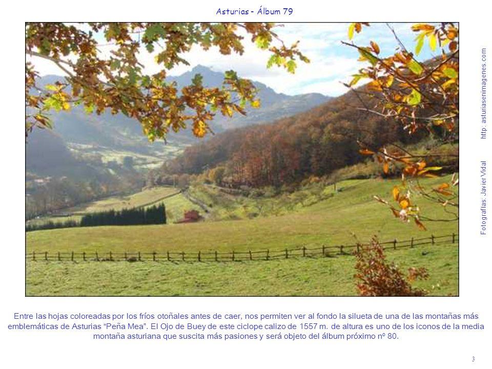 3 Asturias - Álbum 79 Fotografías: Javier Vidal http: asturiasenimagenes.com Entre las hojas coloreadas por los fríos otoñales antes de caer, nos perm