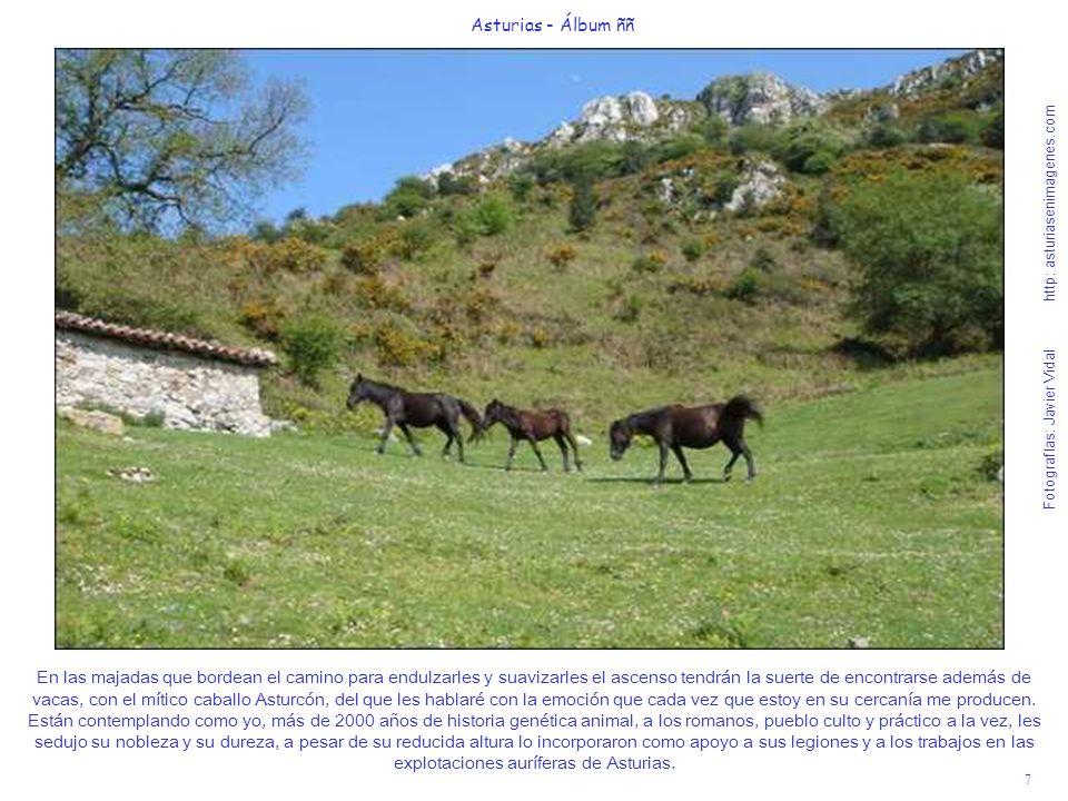 7 Asturias - Álbum ññ Fotografías: Javier Vidal http: asturiasenimagenes.com En las majadas que bordean el camino para endulzarles y suavizarles el as