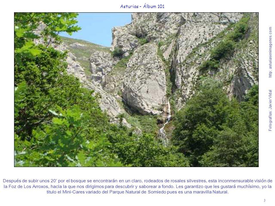 3 Asturias - Álbum 101 Fotografías: Javier Vidal http: asturiasenimagenes.com Después de subir unos 20 por el bosque se encontrarán en un claro, rodea