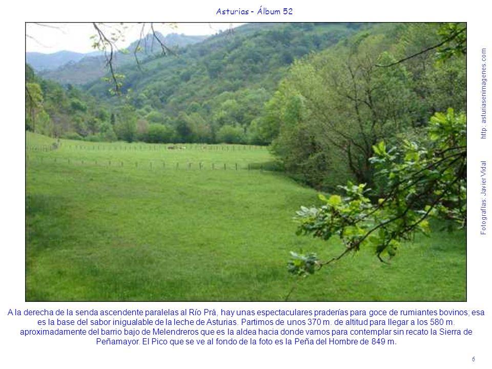6 Asturias - Álbum 52 Fotografías: Javier Vidal http: asturiasenimagenes.com A la derecha de la senda ascendente paralelas al Río Prá, hay unas espect