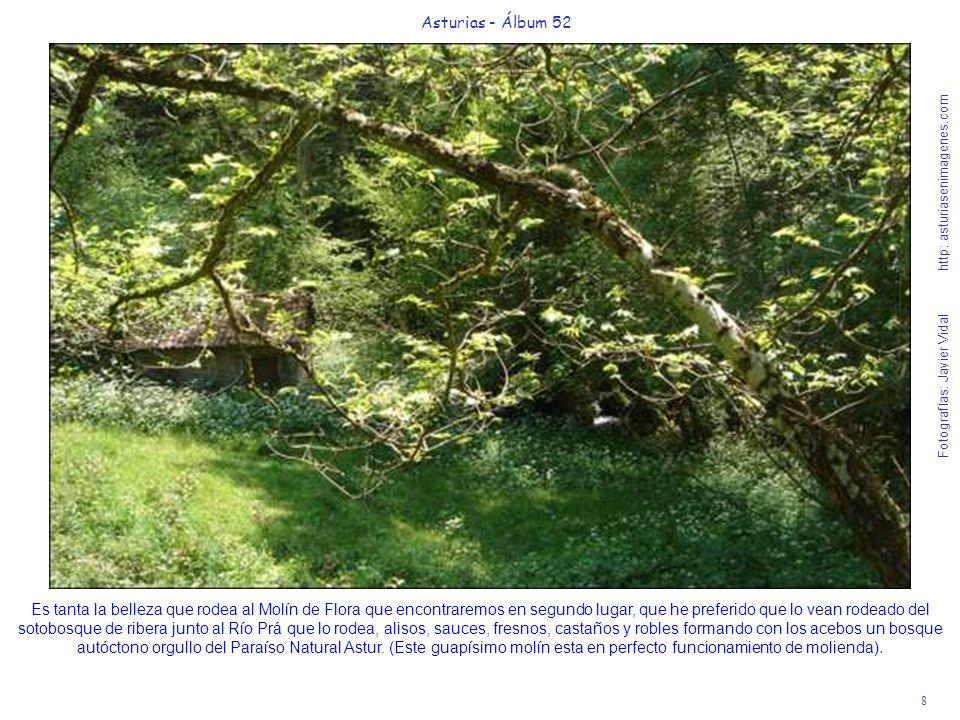 8 Asturias - Álbum 52 Fotografías: Javier Vidal http: asturiasenimagenes.com Es tanta la belleza que rodea al Molín de Flora que encontraremos en segu