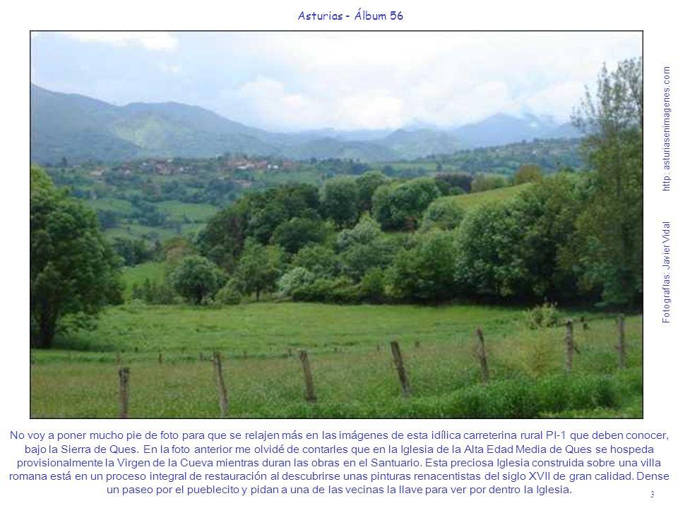 4 Asturias - Álbum 56 Fotografías: Javier Vidal http: asturiasenimagenes.com En mis fotos trato de recoger siempre sensaciones de la flora y fauna Astur para que nuestros visitantes sepan anticipadamente como sentirán en sus ojos la ruralidad de nuestra tierra.