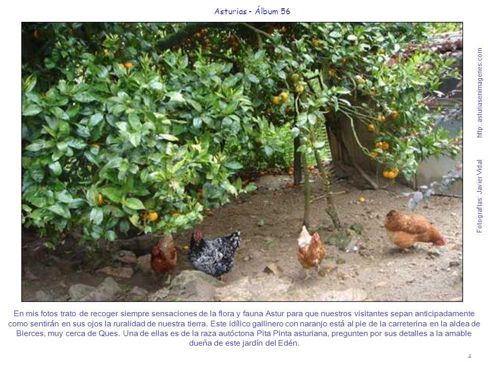 4 Asturias - Álbum 56 Fotografías: Javier Vidal http: asturiasenimagenes.com En mis fotos trato de recoger siempre sensaciones de la flora y fauna Ast