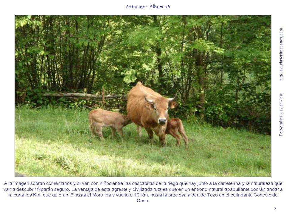 9 Asturias - Álbum 56 Fotografías: Javier Vidal http: asturiasenimagenes.com A la imagen sobran comentarios y si van con niños entre las cascaditas de