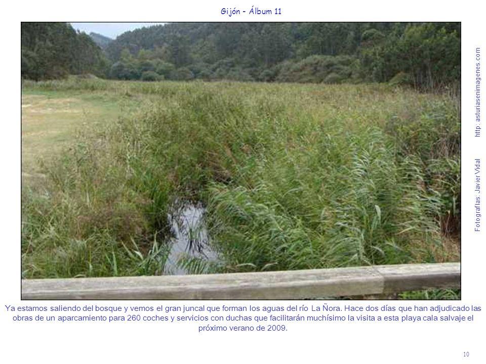 10 Gijón - Álbum 11 Fotografías: Javier Vidal http: asturiasenimagenes.com Ya estamos saliendo del bosque y vemos el gran juncal que forman los aguas