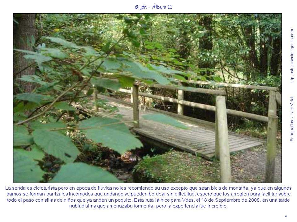 5 Gijón - Álbum 11 Fotografías: Javier Vidal http: asturiasenimagenes.com Es un bosque tan frondoso que no entra mucha luz, pero que nos produce unas increíbles sensaciones naturales.
