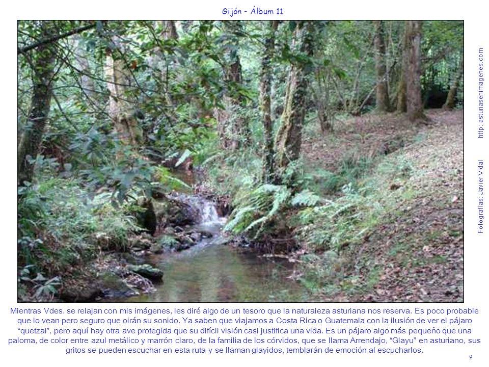 10 Gijón - Álbum 11 Fotografías: Javier Vidal http: asturiasenimagenes.com Ya estamos saliendo del bosque y vemos el gran juncal que forman los aguas del río La Ñora.