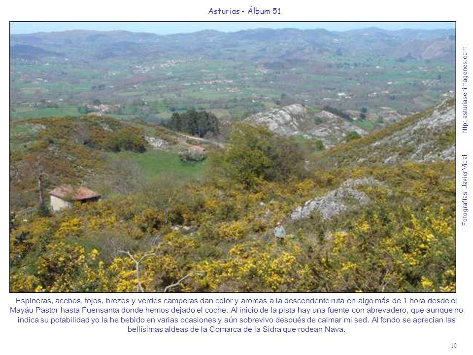 10 Asturias - Álbum 51 Fotografías: Javier Vidal http: asturiasenimagenes.com Espineras, acebos, tojos, brezos y verdes camperas dan color y aromas a la descendente ruta en algo más de 1 hora desde el Mayáu Pastor hasta Fuensanta donde hemos dejado el coche.