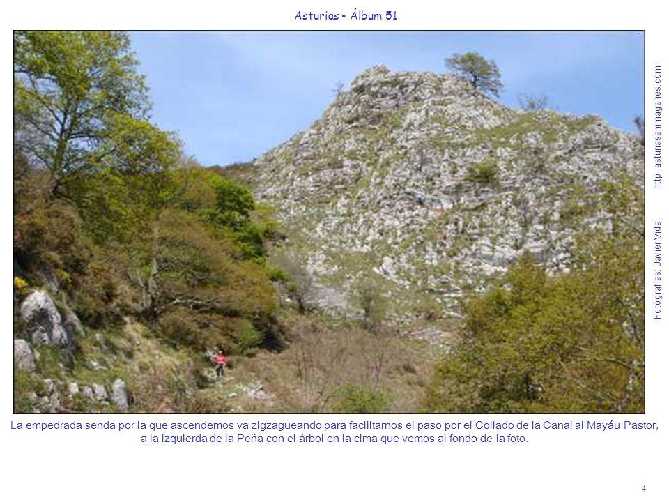 4 Asturias - Álbum 51 Fotografías: Javier Vidal http: asturiasenimagenes.com La empedrada senda por la que ascendemos va zigzagueando para facilitarnos el paso por el Collado de la Canal al Mayáu Pastor, a la izquierda de la Peña con el árbol en la cima que vemos al fondo de la foto.
