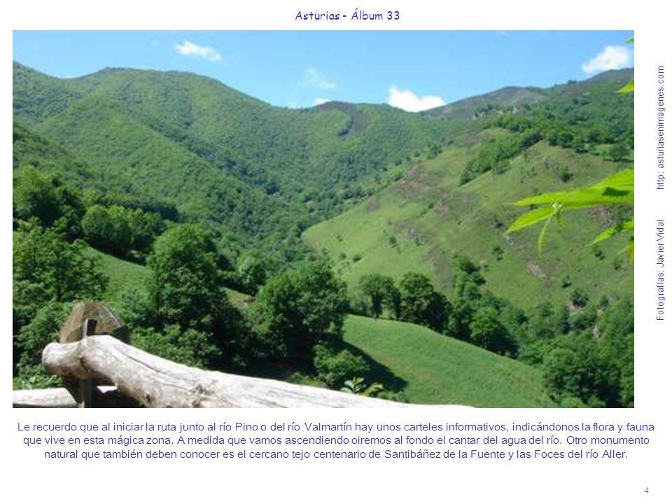 4 Asturias - Álbum 33 Fotografías: Javier Vidal http: asturiasenimagenes.com Le recuerdo que al iniciar la ruta junto al río Pino o del río Valmartín hay unos carteles informativos, indicándonos la flora y fauna que vive en esta mágica zona.