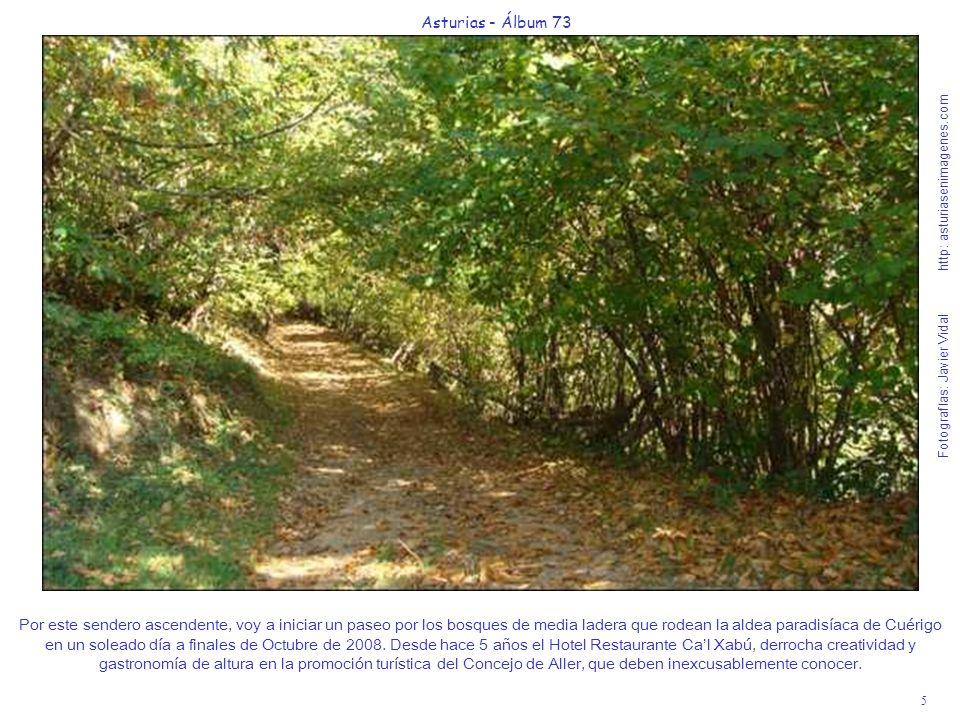 5 Asturias - Álbum 73 Fotografías: Javier Vidal http: asturiasenimagenes.com Por este sendero ascendente, voy a iniciar un paseo por los bosques de me