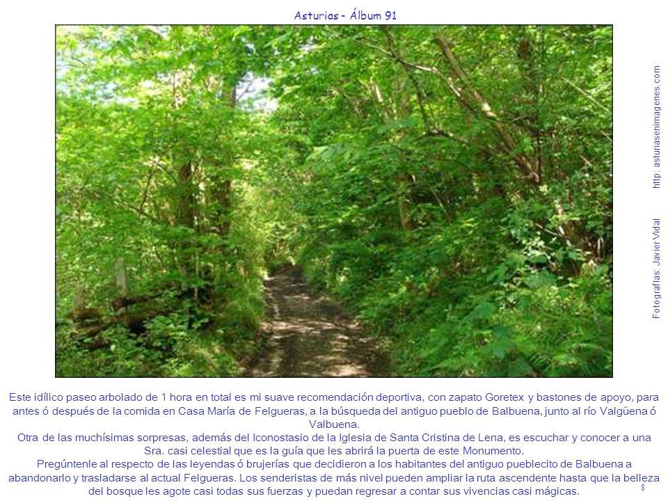 8 Asturias - Álbum 91 Fotografías: Javier Vidal http: asturiasenimagenes.com Este idílico paseo arbolado de 1 hora en total es mi suave recomendación
