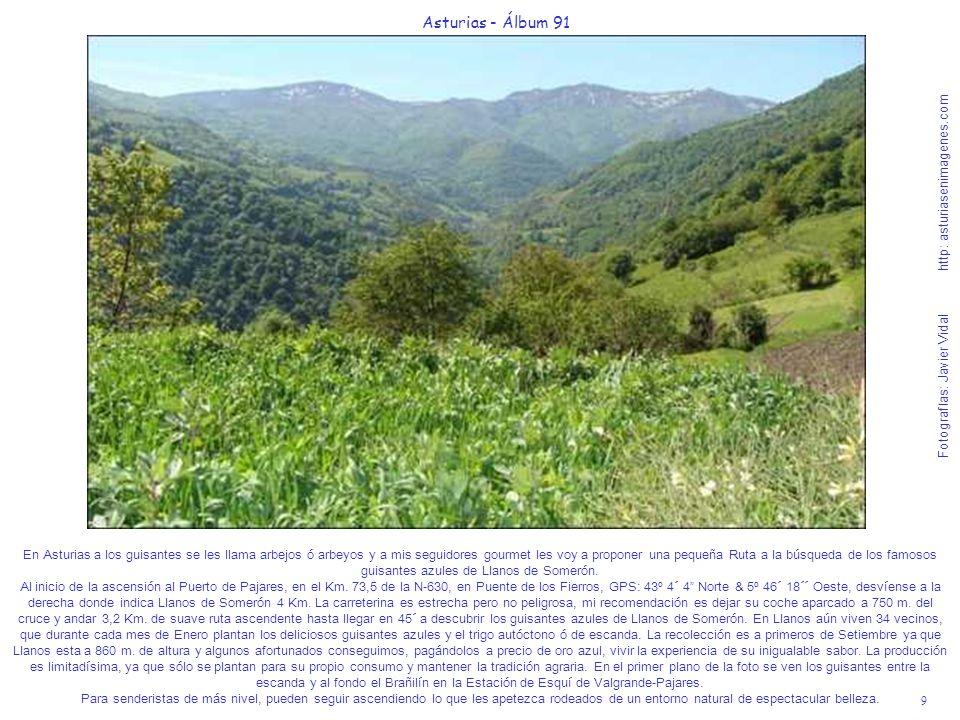 9 Asturias - Álbum 91 Fotografías: Javier Vidal http: asturiasenimagenes.com En Asturias a los guisantes se les llama arbejos ó arbeyos y a mis seguid