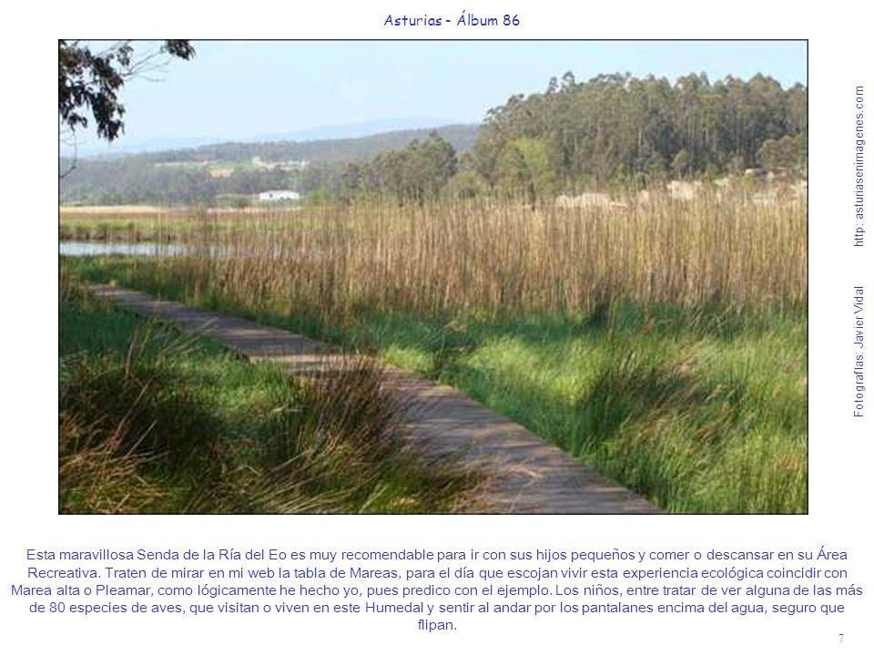 7 Asturias - Álbum 86 Fotografías: Javier Vidal http: asturiasenimagenes.com Esta maravillosa Senda de la Ría del Eo es muy recomendable para ir con s