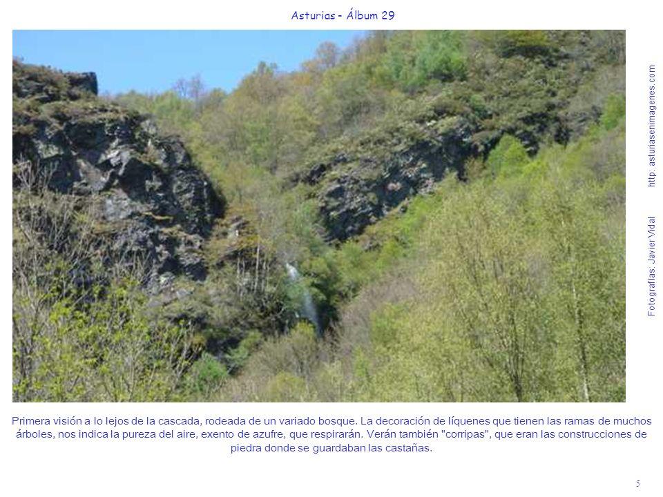 5 Asturias - Álbum 29 Fotografías: Javier Vidal http: asturiasenimagenes.com Primera visión a lo lejos de la cascada, rodeada de un variado bosque. La
