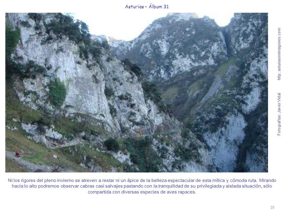 10 Asturias - Álbum 31 Fotografías: Javier Vidal http: asturiasenimagenes.com Ni los rigores del pleno invierno se atreven a restar ni un ápice de la belleza espectacular de esta mítica y cómoda ruta.