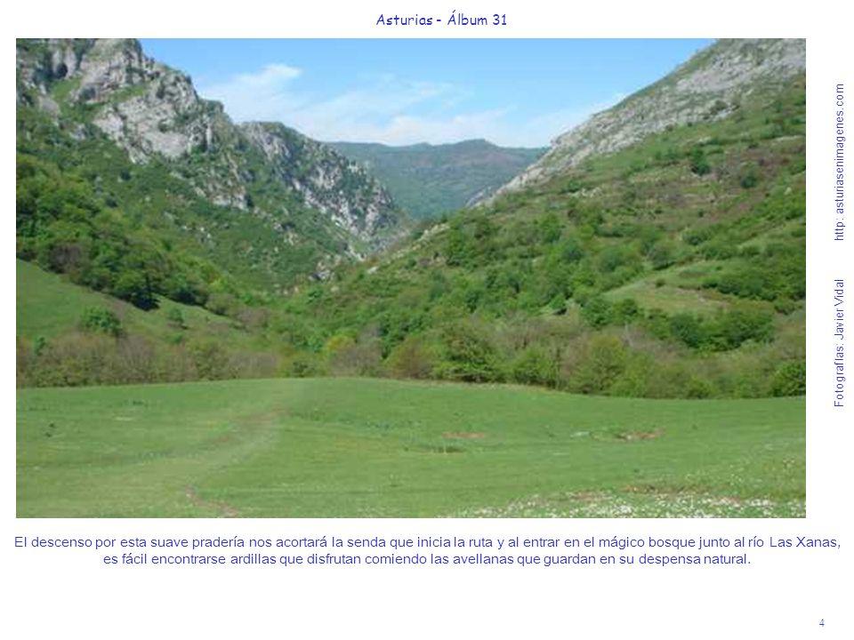 4 Asturias - Álbum 31 Fotografías: Javier Vidal http: asturiasenimagenes.com El descenso por esta suave pradería nos acortará la senda que inicia la r