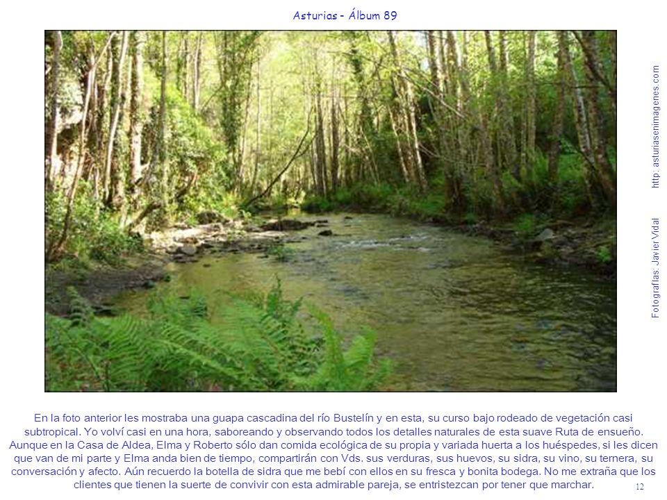 12 Asturias - Álbum 89 Fotografías: Javier Vidal http: asturiasenimagenes.com En la foto anterior les mostraba una guapa cascadina del río Bustelín y en esta, su curso bajo rodeado de vegetación casi subtropical.