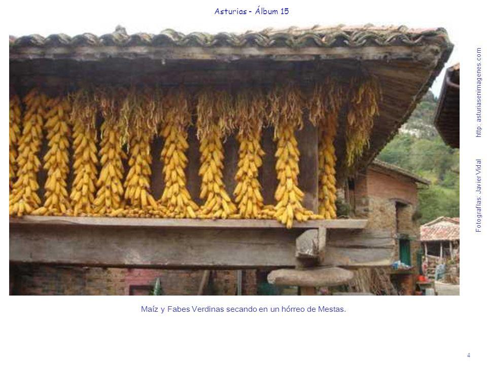 4 Asturias - Álbum 15 Fotografías: Javier Vidal http: asturiasenimagenes.com Maíz y Fabes Verdinas secando en un hórreo de Mestas.