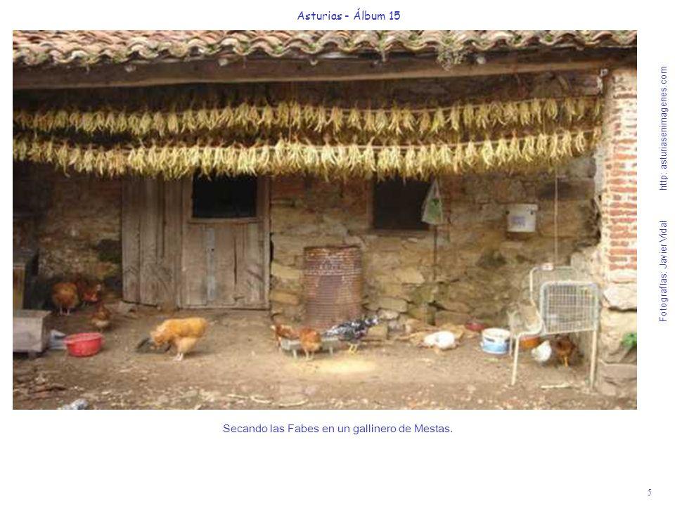5 Asturias - Álbum 15 Fotografías: Javier Vidal http: asturiasenimagenes.com Secando las Fabes en un gallinero de Mestas.