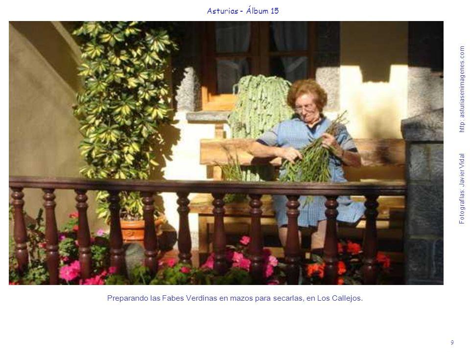 9 Asturias - Álbum 15 Fotografías: Javier Vidal http: asturiasenimagenes.com Preparando las Fabes Verdinas en mazos para secarlas, en Los Callejos.