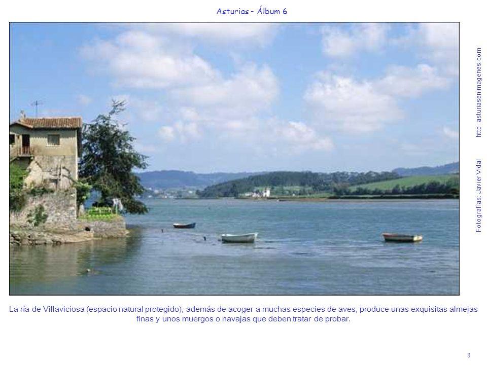 8 Asturias - Álbum 6 Fotografías: Javier Vidal http: asturiasenimagenes.com La ría de Villaviciosa (espacio natural protegido), además de acoger a muc