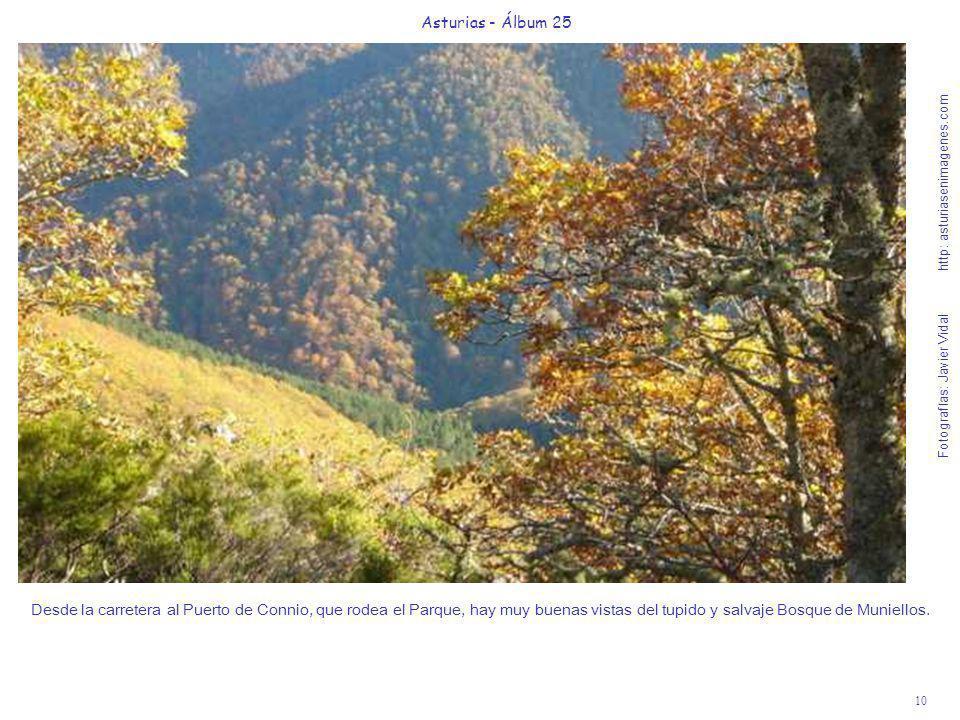 10 Asturias - Álbum 25 Fotografías: Javier Vidal http: asturiasenimagenes.com Desde la carretera al Puerto de Connio, que rodea el Parque, hay muy bue