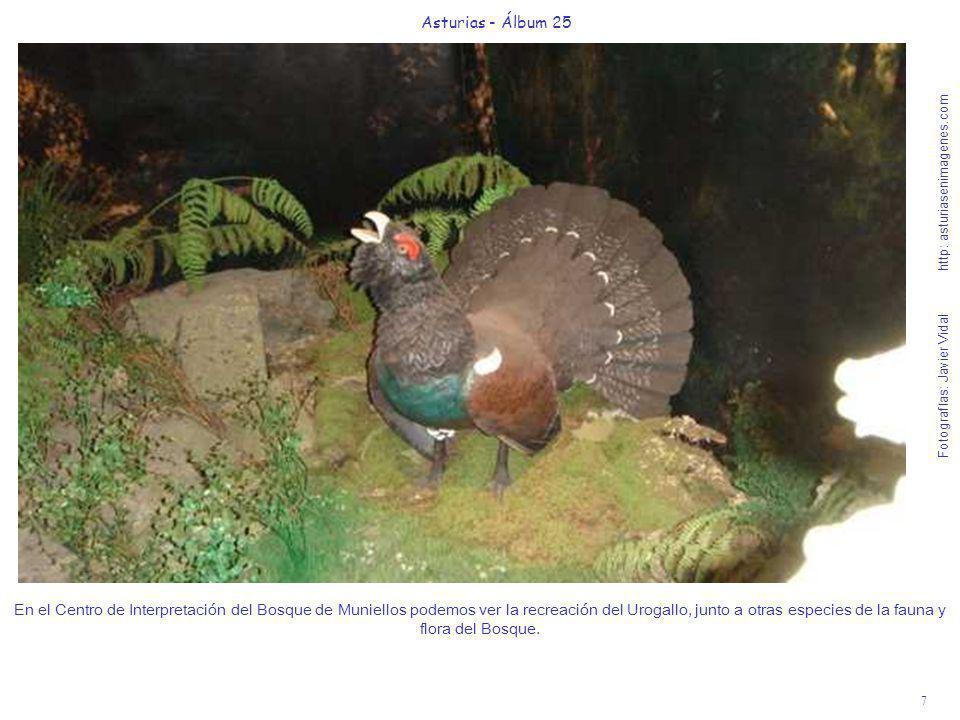7 Asturias - Álbum 25 Fotografías: Javier Vidal http: asturiasenimagenes.com En el Centro de Interpretación del Bosque de Muniellos podemos ver la rec