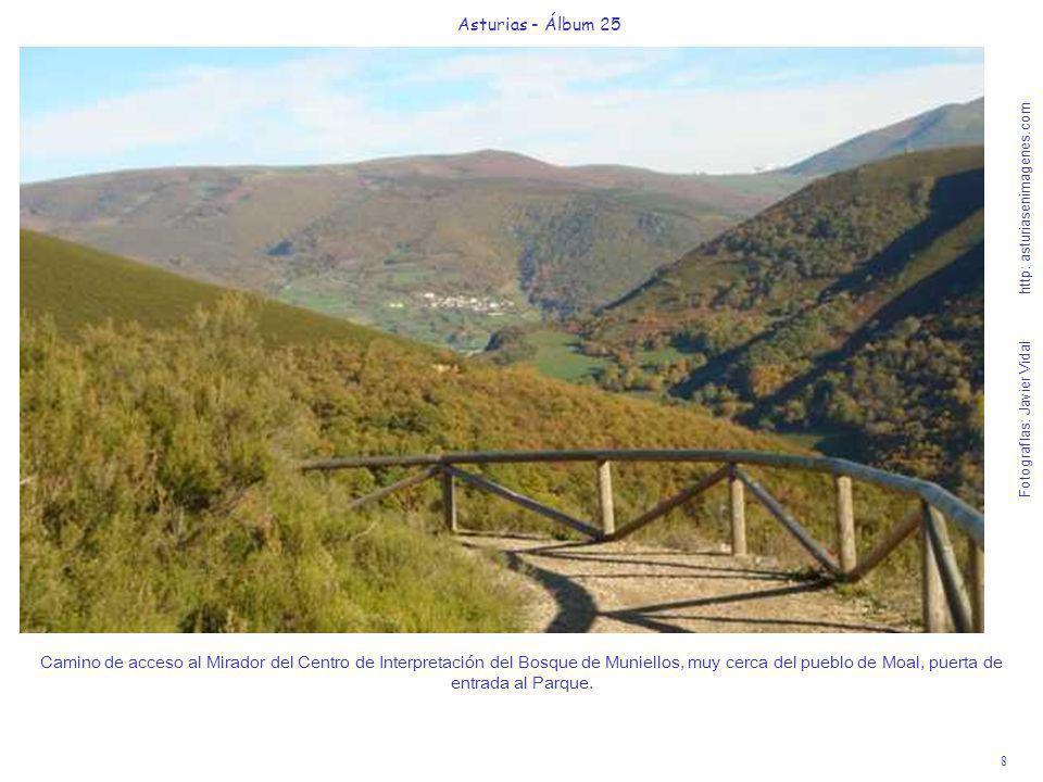 8 Asturias - Álbum 25 Fotografías: Javier Vidal http: asturiasenimagenes.com Camino de acceso al Mirador del Centro de Interpretación del Bosque de Mu