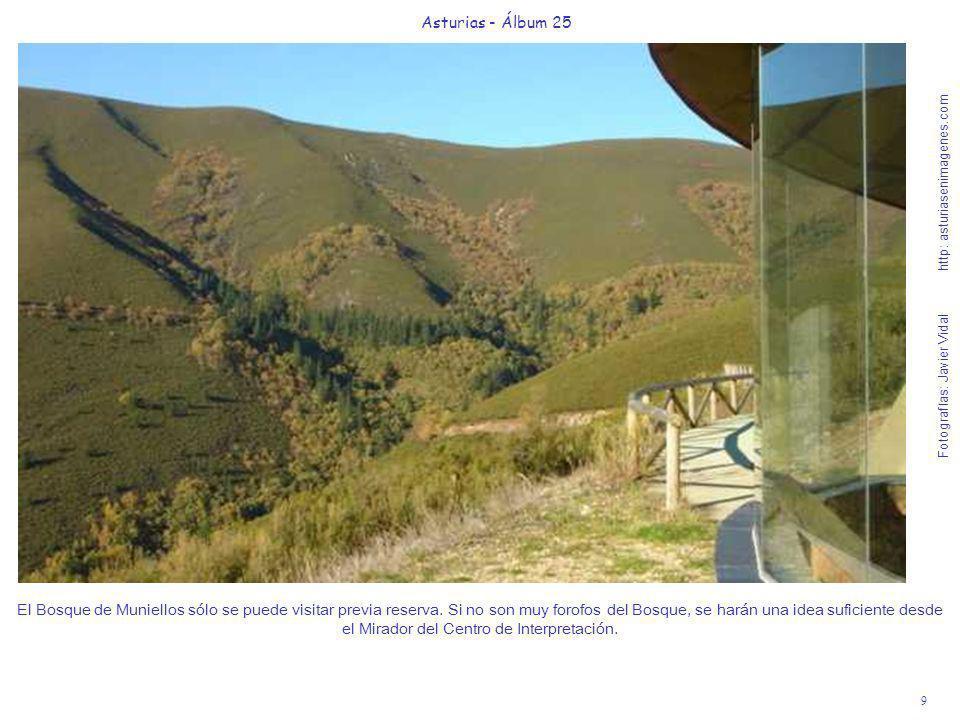 10 Asturias - Álbum 25 Fotografías: Javier Vidal http: asturiasenimagenes.com Desde la carretera al Puerto de Connio, que rodea el Parque, hay muy buenas vistas del tupido y salvaje Bosque de Muniellos.