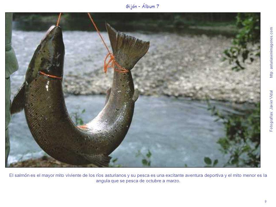 9 Gijón - Álbum 7 Fotografías: Javier Vidal http: asturiasenimagenes.com El salmón es el mayor mito viviente de los ríos asturianos y su pesca es una