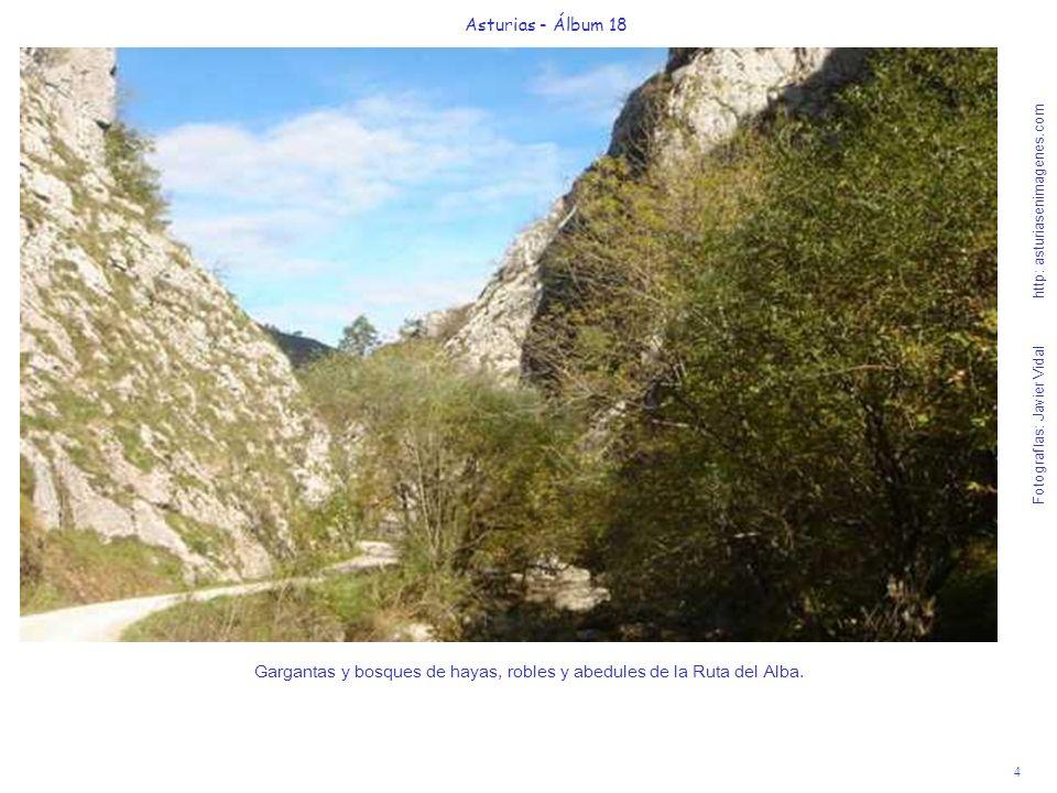 4 Asturias - Álbum 18 Fotografías: Javier Vidal http: asturiasenimagenes.com Gargantas y bosques de hayas, robles y abedules de la Ruta del Alba.