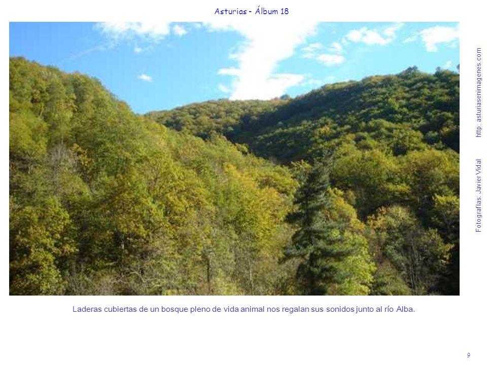 9 Asturias - Álbum 18 Fotografías: Javier Vidal http: asturiasenimagenes.com Laderas cubiertas de un bosque pleno de vida animal nos regalan sus sonid
