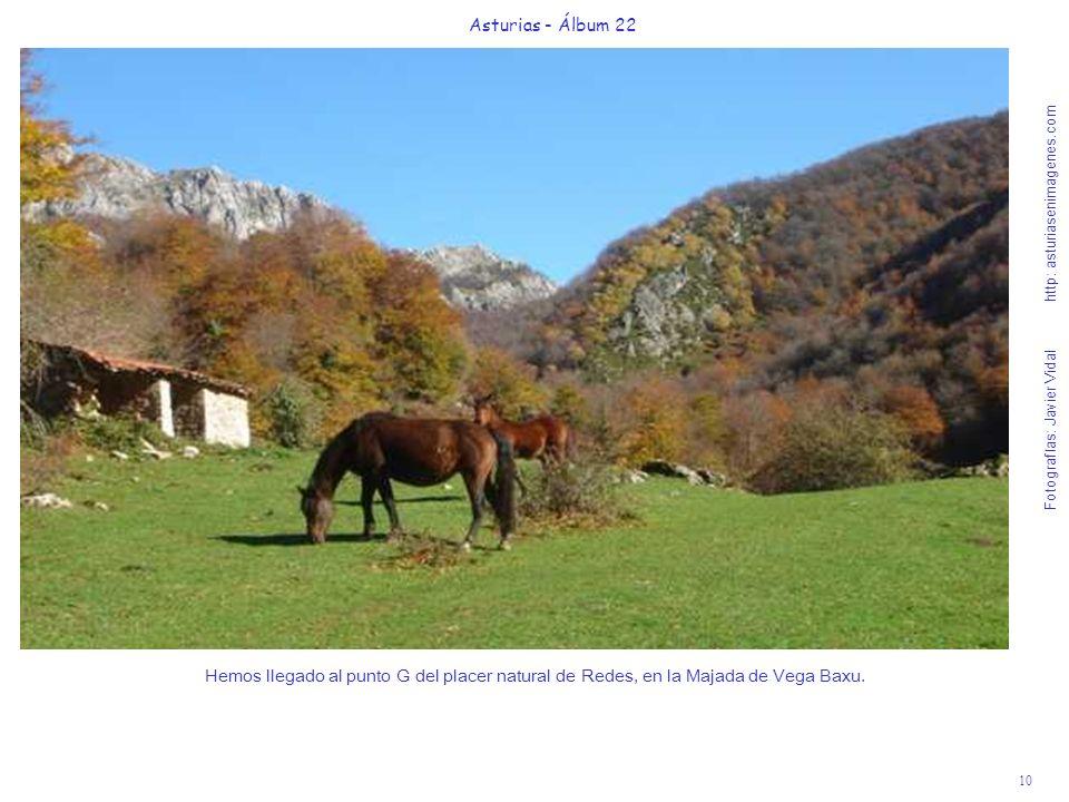 11 Asturias - Álbum 22 Fotografías: Javier Vidal http: asturiasenimagenes.com Las huellas de los rebaños de venados pastando hasta el amanecer en Vega Baxu, nos harán sentir su presencia.