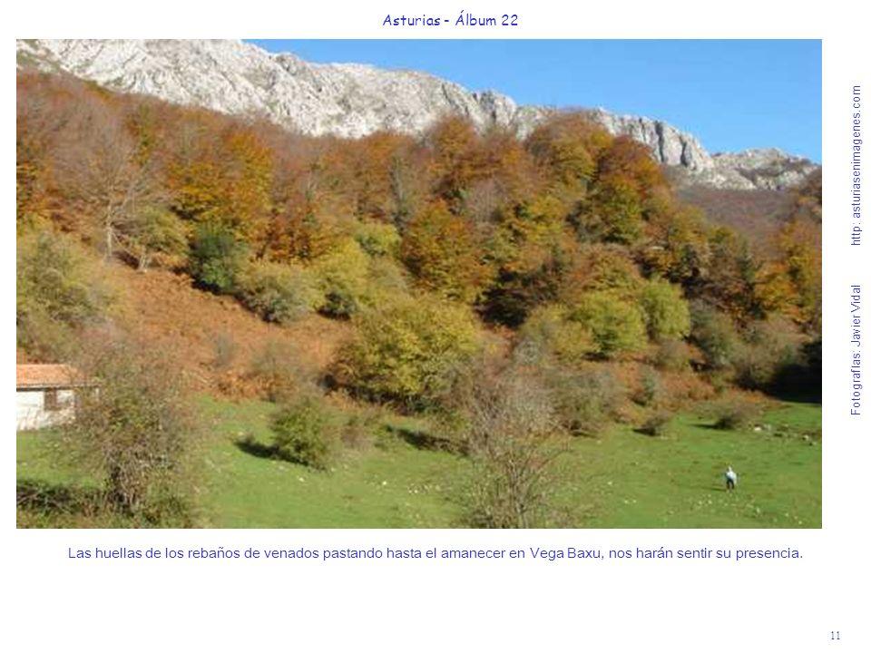 12 Asturias - Álbum 22 Al fondo de la Majada de Vega Baxu hay una mágica fuente junto al río Corralín donde se unen dos bosques míticos de hayas, el de Redes y el de Peloño.