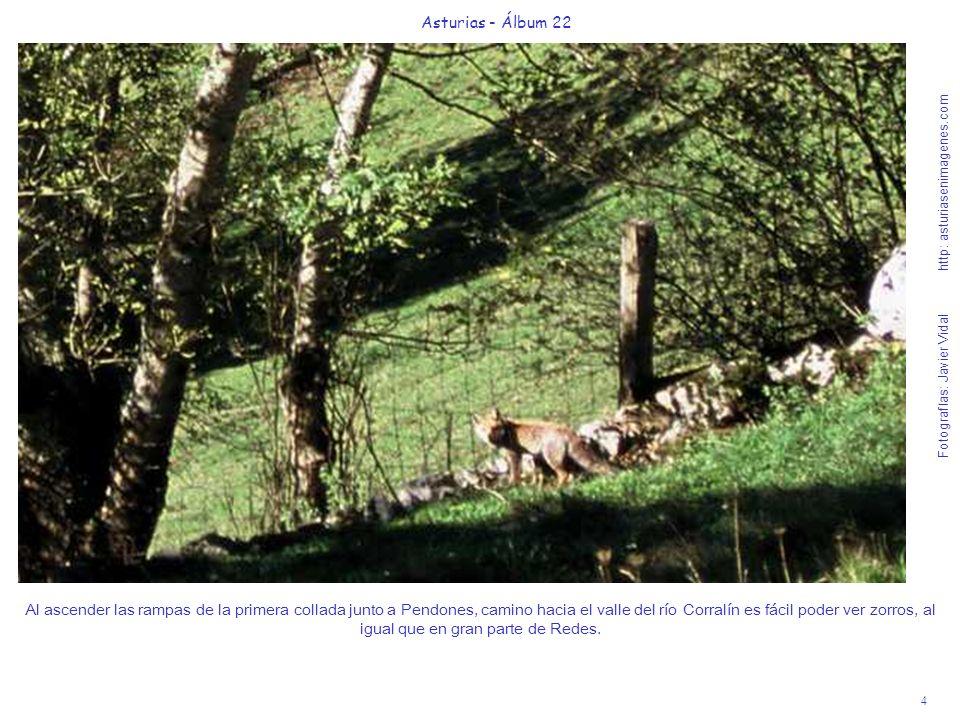 5 Asturias - Álbum 22 Fotografías: Javier Vidal http: asturiasenimagenes.com A la derecha del camino hacia Vega Baxu, podrán oír y ver el río Nalón, recién nacido en el Puerto de Tarna.