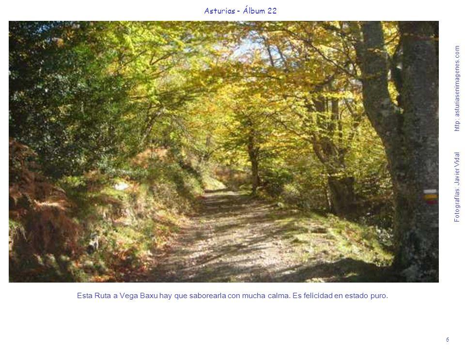 7 Asturias - Álbum 22 Fotografías: Javier Vidal http: asturiasenimagenes.com Las hayas del Parque Natural de Redes son algo más que árboles de una Reserva de la Biosfera.