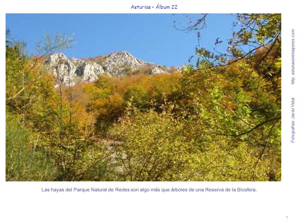 8 Asturias - Álbum 22 Fotografías: Javier Vidal http: asturiasenimagenes.com Cruzando unos troncos en el camino hacia el corazón de Redes entendemos la felicidad del ganado de la Majada de la Texera.