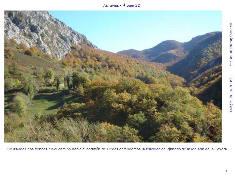9 Asturias - Álbum 22 Fotografías: Javier Vidal http: asturiasenimagenes.com Les faltará memoria para guardar estos bellos recuerdos del Parque de Redes.
