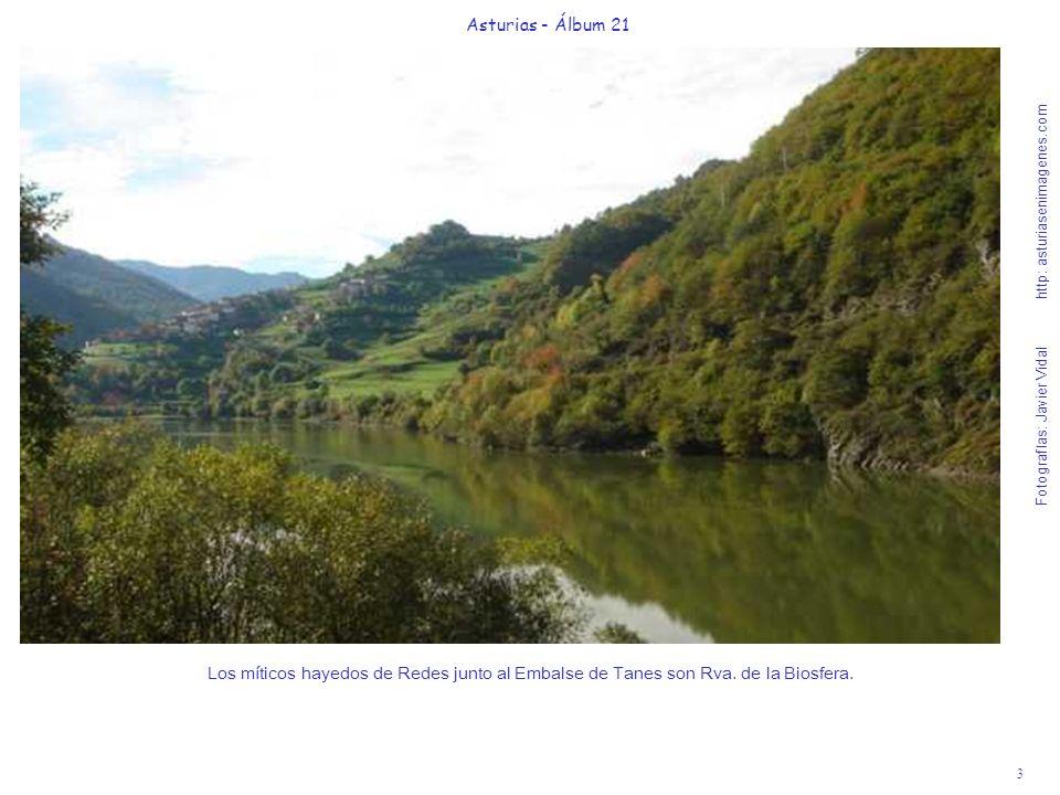 3 Asturias - Álbum 21 Fotografías: Javier Vidal http: asturiasenimagenes.com Los míticos hayedos de Redes junto al Embalse de Tanes son Rva. de la Bio