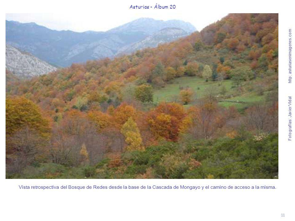 11 Asturias - Álbum 20 Fotografías: Javier Vidal http: asturiasenimagenes.com Vista retrospectiva del Bosque de Redes desde la base de la Cascada de M